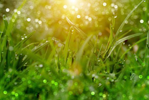 Why is Centipede Grass Ideal for South Carolina's Lawns?