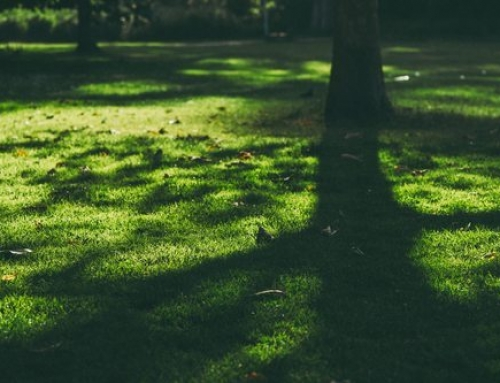 What are the Different Types of Grasses that Grow Well in the Shade in South Carolina?