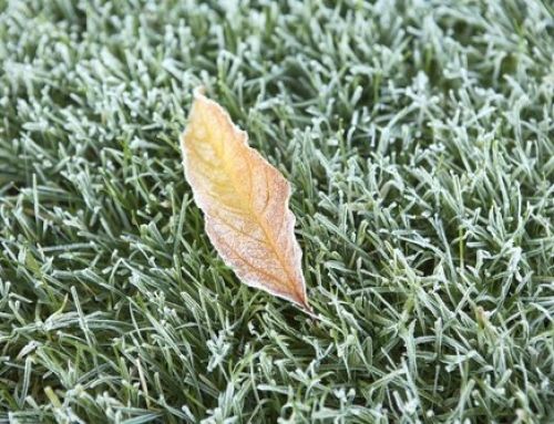 How Do I Prepare My Lawn for Winter in South Carolina?