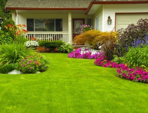 Why is Bahiagrass an Excellent Choice for Your South Carolina Lawn?