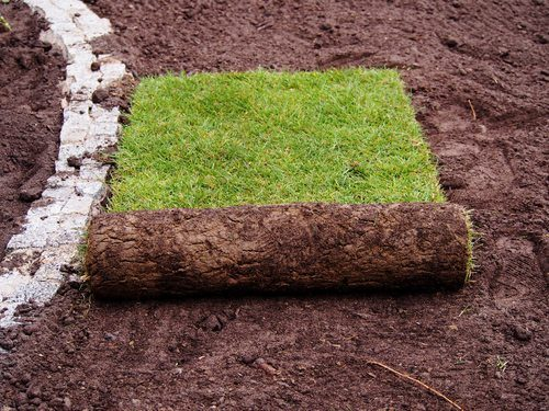 Should I Use Sod For My South Carolina Lawn?
